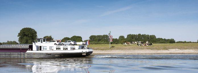 schip vaart op de IJssel langs koeien
